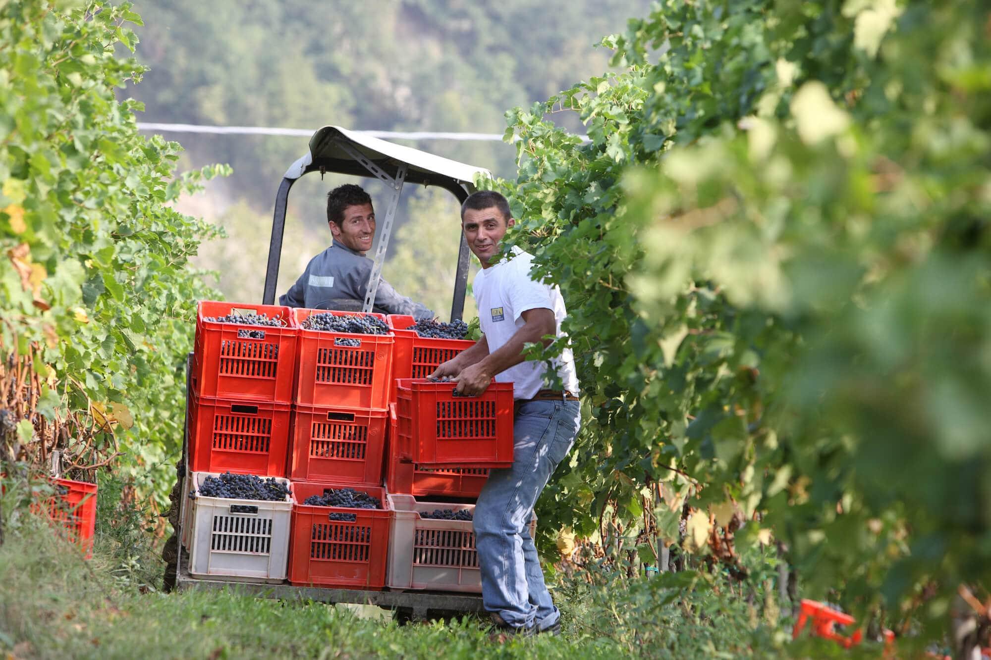 zuid-italie wijnproeverij